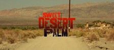 Sweet Desert Palm-2